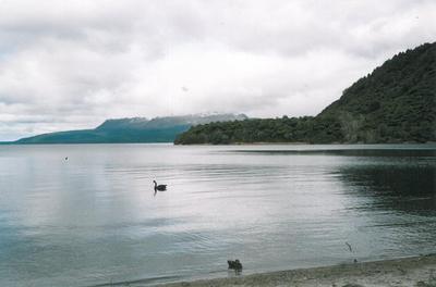 Tarawera 1990s
